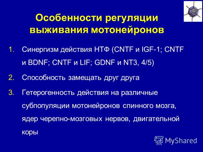 Особенности регуляции выживания мотонейронов 1.Синергизм действия НТФ (CNTF и IGF-1; CNTF и BDNF; CNTF и LIF; GDNF и NT3, 4/5) 2.Способность замещать друг друга 3.Гетерогенность действия на различные субпопуляции мотонейронов спинного мозга, ядер чер