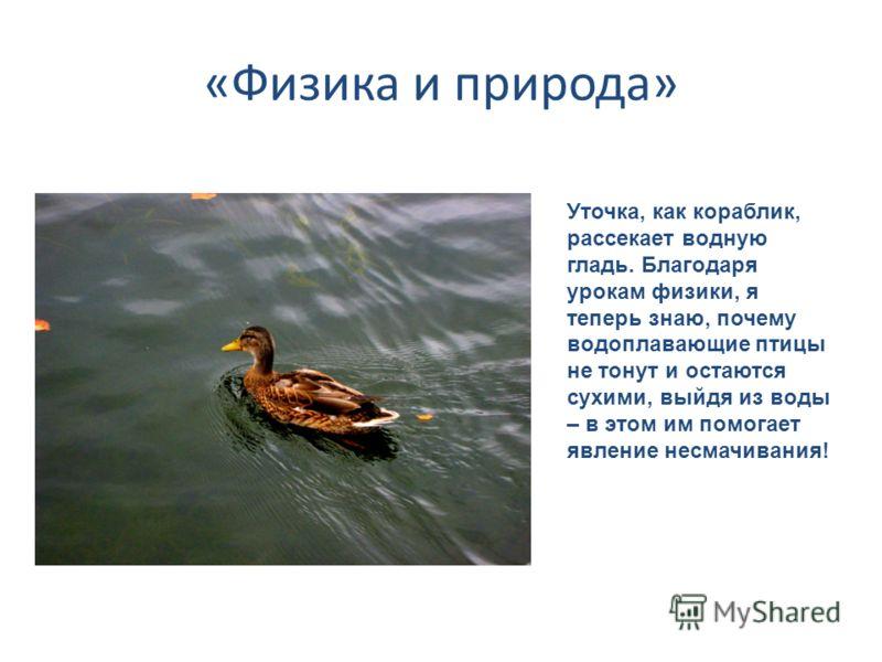 «Физика и природа» Уточка, как кораблик, рассекает водную гладь. Благодаря урокам физики, я теперь знаю, почему водоплавающие птицы не тонут и остаются сухими, выйдя из воды – в этом им помогает явление несмачивания!