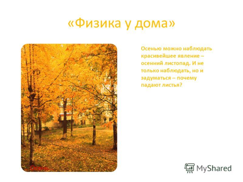 «Физика у дома» Осенью можно наблюдать красивейшее явление – осенний листопад. И не только наблюдать, но и задуматься – почему падают листья?