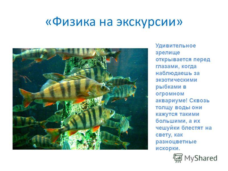 «Физика на экскурсии» Удивительное зрелище открывается перед глазами, когда наблюдаешь за экзотическими рыбками в огромном аквариуме! Сквозь толщу воды они кажутся такими большими, а их чешуйки блестят на свету, как разноцветные искорки.