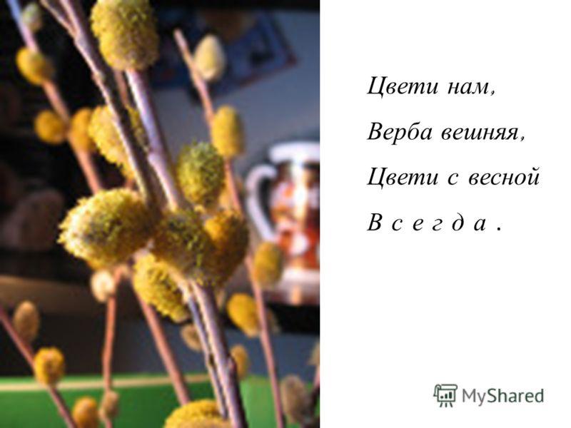 Цвети нам, Верба вешняя, Цвети с весной В с е г д а.
