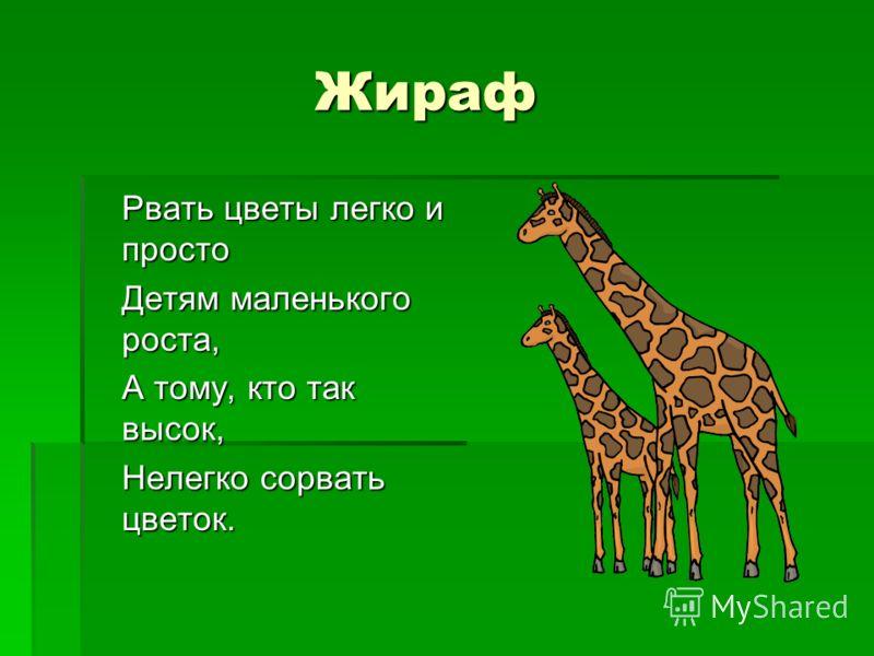 Жираф Рвать цветы легко и просто Детям маленького роста, А тому, кто так высок, Нелегко сорвать цветок.