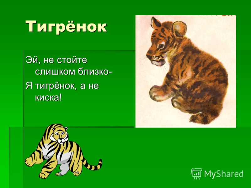 Тигрёнок Тигрёнок Эй, не стойте слишком близко- Я тигрёнок, а не киска!