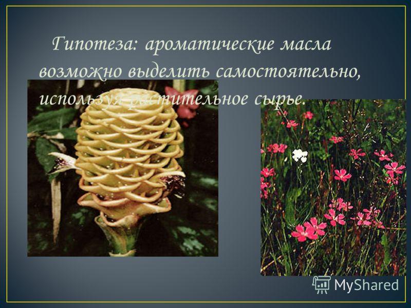 Гипотеза: ароматические масла возможно выделить самостоятельно, используя растительное сырье.