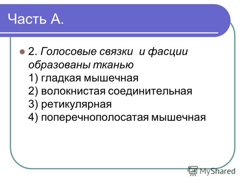 Часть А. 2. Голосовые связки и фасции образованы тканью 1) гладкая мышечная 2) волокнистая соединительная 3) ретикулярная 4) поперечнополосатая мышечная