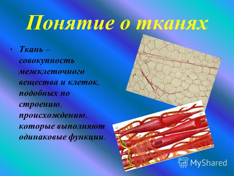 Понятие о тканях Ткань – совокупность межклеточного вещества и клеток, подобных по строению, происхождению, которые выполняют одинаковые функции.