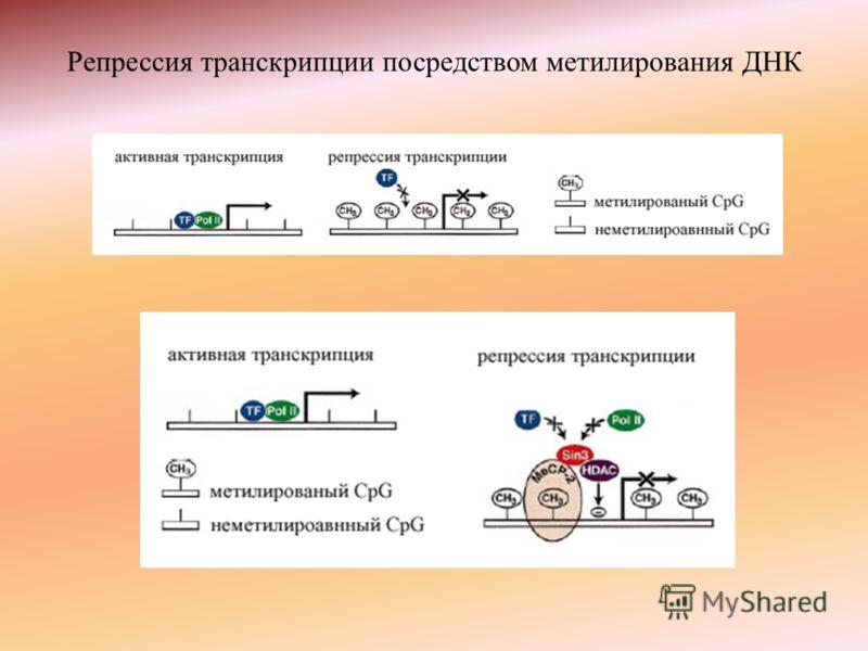 Репрессия транскрипции посредством метилирования ДНК