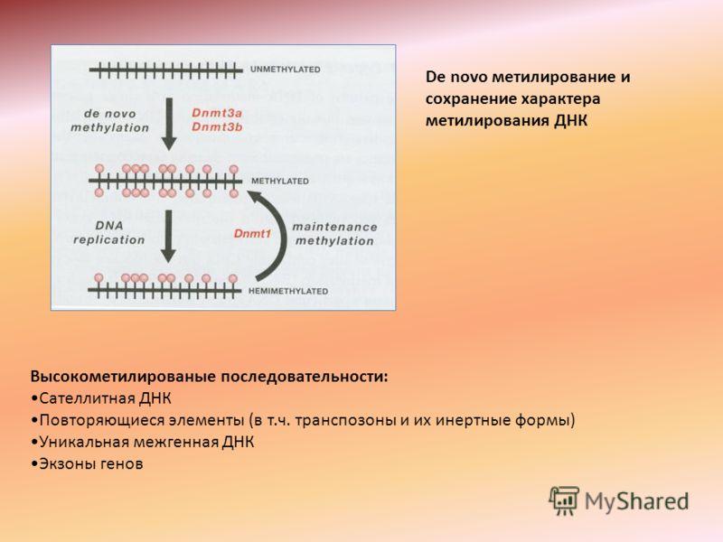 De novo метилирование и сохранение характера метилирования ДНК Высокометилированые последовательности: Сателлитная ДНК Повторяющиеся элементы (в т.ч. транспозоны и их инертные формы) Уникальная межгенная ДНК Экзоны генов