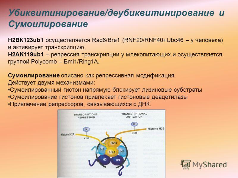 Убиквитинирование/деубиквитинирование и Сумоилирование Н2ВК123ub1 осуществляется Rad6/Bre1 (RNF20/RNF40+Ubc46 – у человека) и активирует транскрипцию. H2AK119ub1 – репрессия транскрипции у млекопитающих и осуществляется группой Polycomb – Bmi1/Ring1A