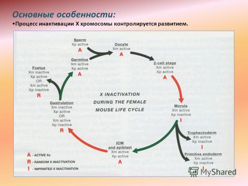 Основные особенности: Процесс инактивации Х хромосомы контролируется развитием.