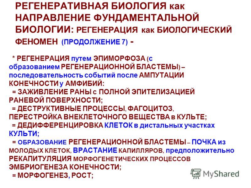 РЕГЕНЕРАТИВНАЯ БИОЛОГИЯ как НАПРАВЛЕНИЕ ФУНДАМЕНТАЛЬНОЙ БИОЛОГИИ: РЕГЕНЕРАЦИЯ как БИОЛОГИЧЕСКИЙ ФЕНОМЕН (ПРОДОЛЖЕНИЕ 7) - * РЕГЕНЕРАЦИЯ путем ЭПИМОРФОЗА ( с образованием РЕГЕНЕРАЦИОННОЙ БЛАСТЕМЫ ) – последовательность событий после АМПУТАЦИИ КОНЕЧНОС