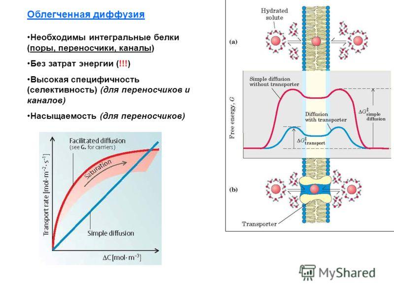 Облегченная диффузия Необходимы интегральные белки (поры, переносчики, каналы) Без затрат энергии (!!!) Высокая специфичность (селективность) (для переносчиков и каналов) Насыщаемость (для переносчиков)