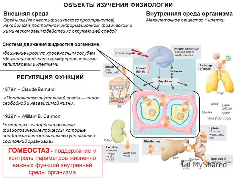 Внешняя среда Организм (как часть физического пространства) находится в постоянном информационном, физическом и химическом взаимодействии с окружающей средой ОБЪЕКТЫ ИЗУЧЕНИЯ ФИЗИОЛОГИИ Внутренняя среда организма Межклеточное вещество + клетки Систем
