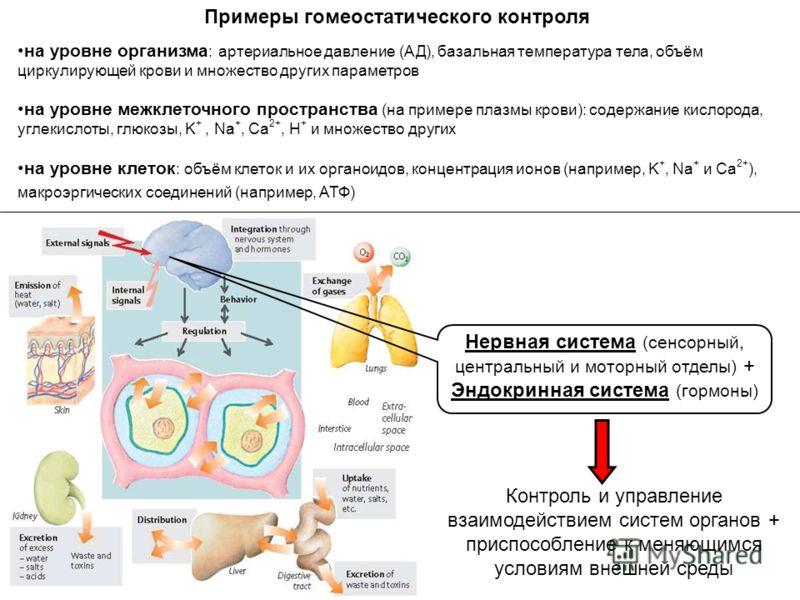 Примеры гомеостатического контроля на уровне организма : артериальное давление (АД), базальная температура тела, объём циркулирующей крови и множество других параметров на уровне межклеточного пространства (на примере плазмы крови): содержание кислор