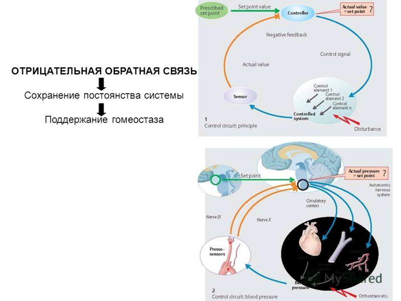 ОТРИЦАТЕЛЬНАЯ ОБРАТНАЯ СВЯЗЬ Сохранение постоянства системы Поддержание гомеостаза