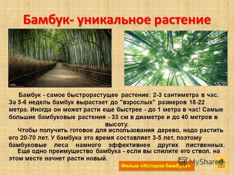 Бамбук- уникальное растение Бамбук - самое быстрорастущее растение: 2-3 сантиметра в час. За 5-6 недель бамбук вырастает до