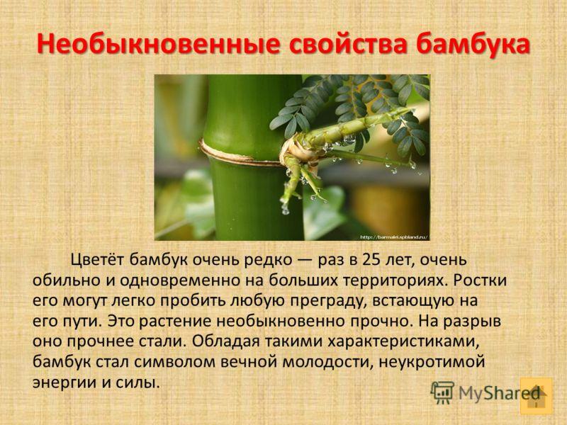 Необыкновенные свойства бамбука Цветёт бамбук очень редко раз в 25 лет, очень обильно и одновременно на больших территориях. Ростки его могут легко пробить любую преграду, встающую на его пути. Это растение необыкновенно прочно. На разрыв оно прочнее