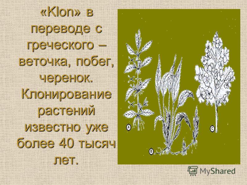 «Klon» в переводе с греческого – веточка, побег, черенок. Клонирование растений известно уже более 40 тысяч лет.