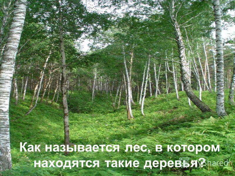 Как называется лес, в котором находятся такие деревья?