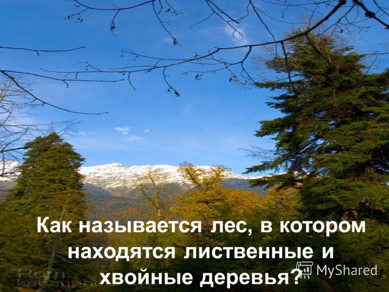 Как называется лес, в котором находятся лиственные и хвойные деревья?