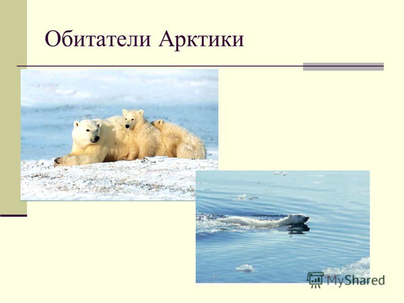 Обитатели Арктики