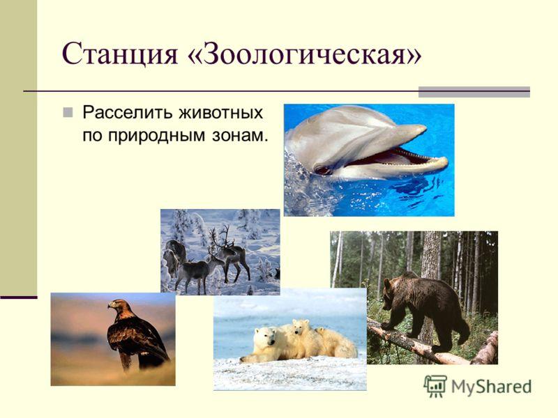 Станция «Зоологическая» Расселить животных по природным зонам.