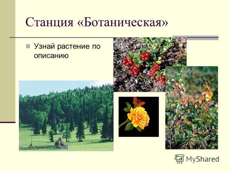 Станция «Ботаническая» Узнай растение по описанию