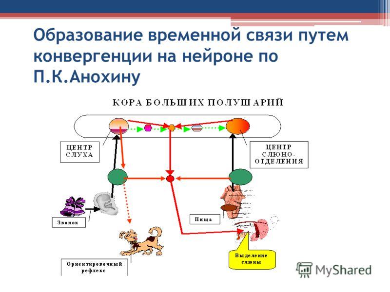 Образование временной связи путем конвергенции на нейроне по П.К.Анохину