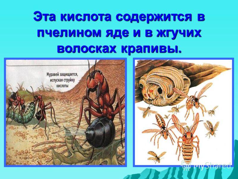Эта кислота содержится в пчелином яде и в жгучих волосках крапивы.