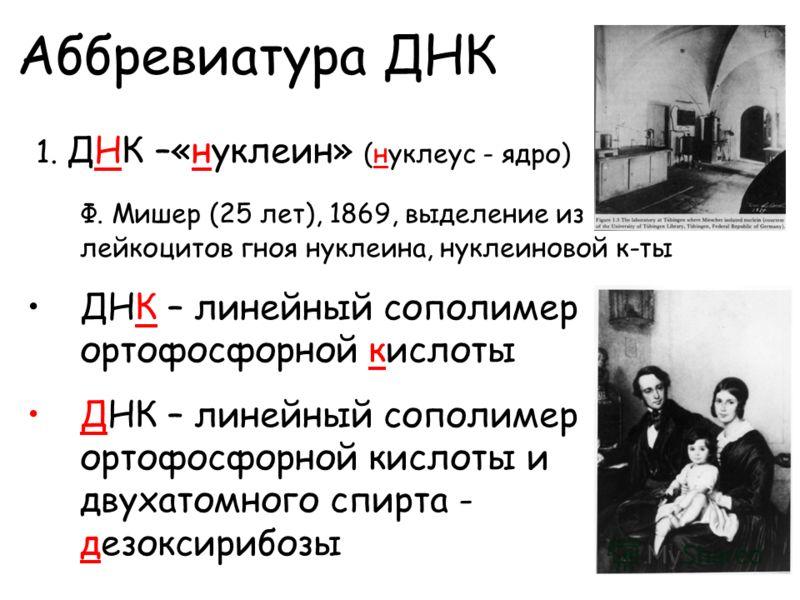 1. ДНК –«нуклеин» (нуклеус - ядро) Ф. Мишер (25 лет), 1869, выделение из лейкоцитов гноя нуклеина, нуклеиновой к-ты ДНК – линейный сополимер ортофосфорной кислоты ДНК – линейный сополимер ортофосфорной кислоты и двухатомного спирта - дезоксирибозы Аб