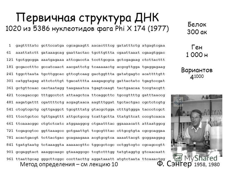 Первичная структура ДНК 1020 из 5386 нуклеотидов фага Phi Х 174 (1977) 1 gagttttatc gcttccatga cgcagaagtt aacactttcg gatatttctg atgagtcgaa 61 aaattatctt gataaagcag gaattactac tgcttgttta cgaattaaat cgaagtggac 121 tgctggcgga aaatgagaaa attcgaccta tcctt