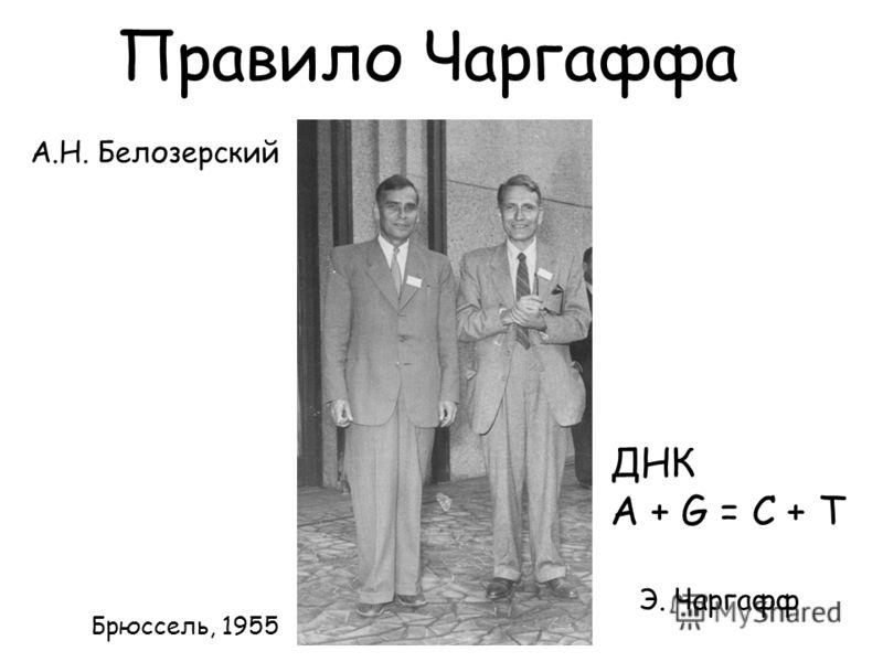 А.Н. Белозерский Э. Чаргафф Брюссель, 1955 ДНК A + G = C + T Правило Чаргаффа