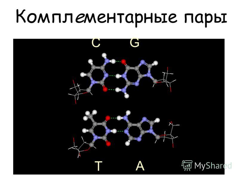Комплементарные пары С Т G A
