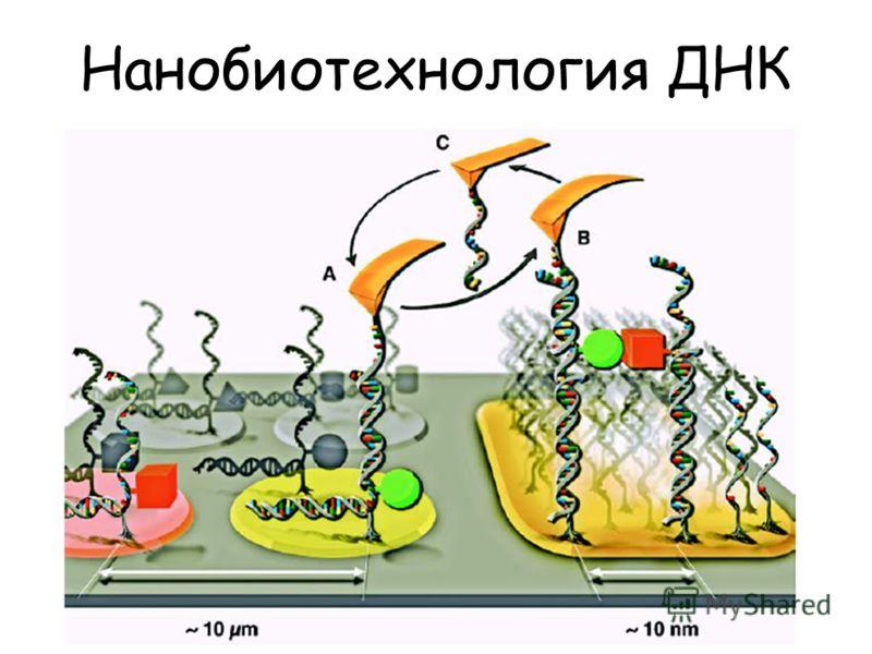 Нанобиотехнология ДНК