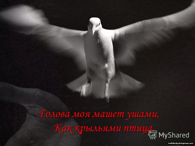 Голова моя машет ушами, Как крыльями птица. Голова моя машет ушами, Как крыльями птица.