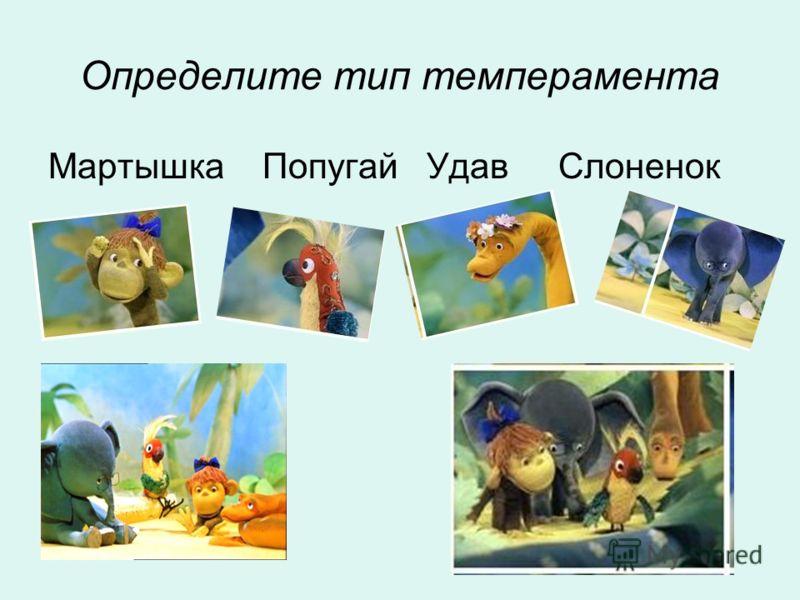 Определите тип темперамента Мартышка Попугай Удав Слоненок