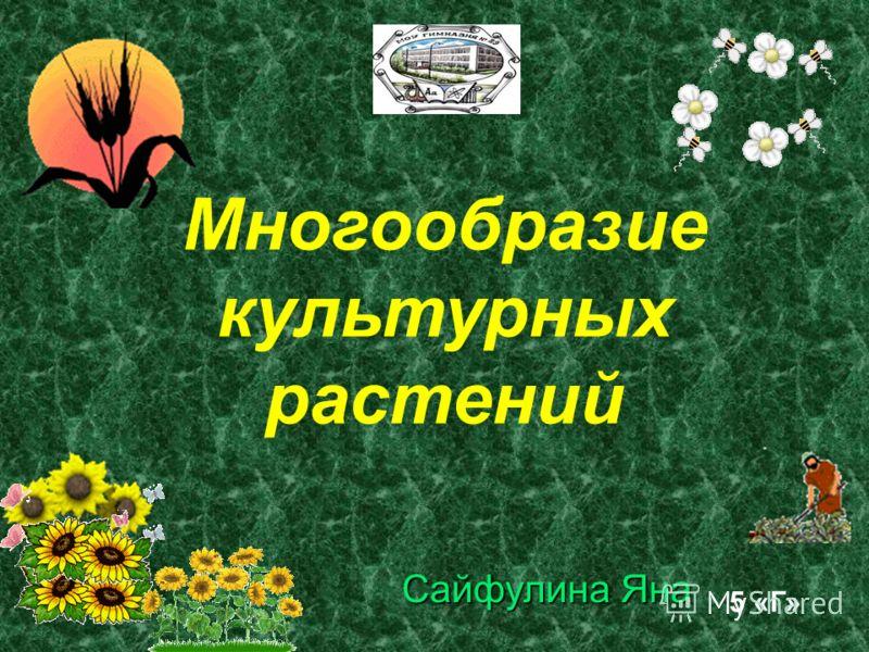 Многообразие культурных растений Сайфулина Яна 5 «Г»