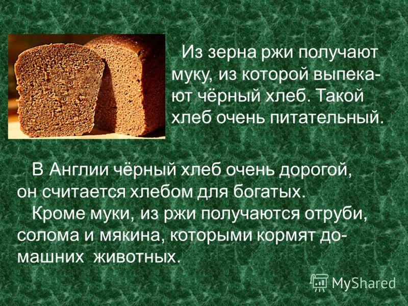 Из зерна ржи получают муку, из которой выпека- ют чёрный хлеб. Такой хлеб очень питательный. В Англии чёрный хлеб очень дорогой, он считается хлебом для богатых. Кроме муки, из ржи получаются отруби, солома и мякина, которыми кормят до- машних животн