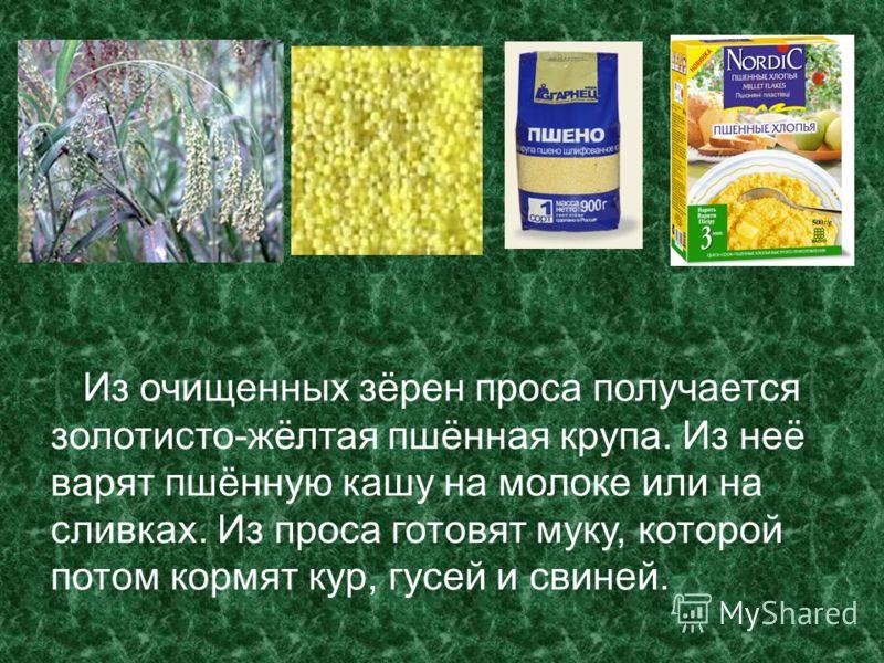 Из очищенных зёрен проса получается золотисто-жёлтая пшённая крупа. Из неё варят пшённую кашу на молоке или на сливках. Из проса готовят муку, которой потом кормят кур, гусей и свиней.