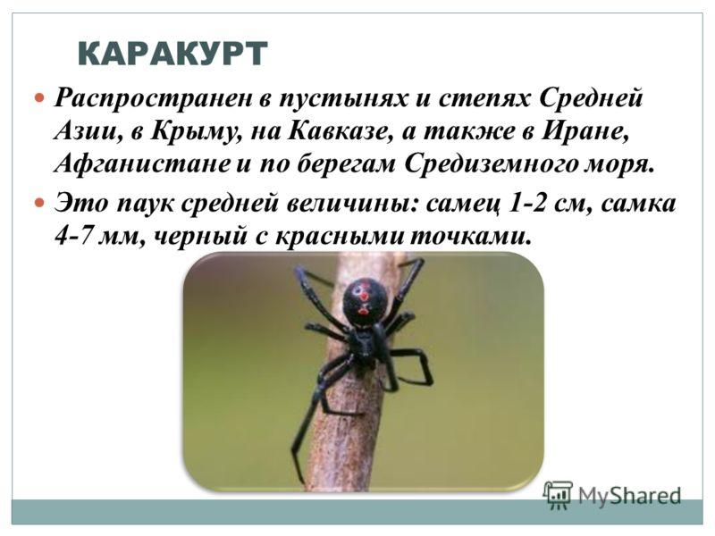 КАРАКУРТ Распространен в пустынях и степях Средней Азии, в Крыму, на Кавказе, а также в Иране, Афганистане и по берегам Средиземного моря. Это паук средней величины: самец 1-2 см, самка 4-7 мм, черный с красными точками.