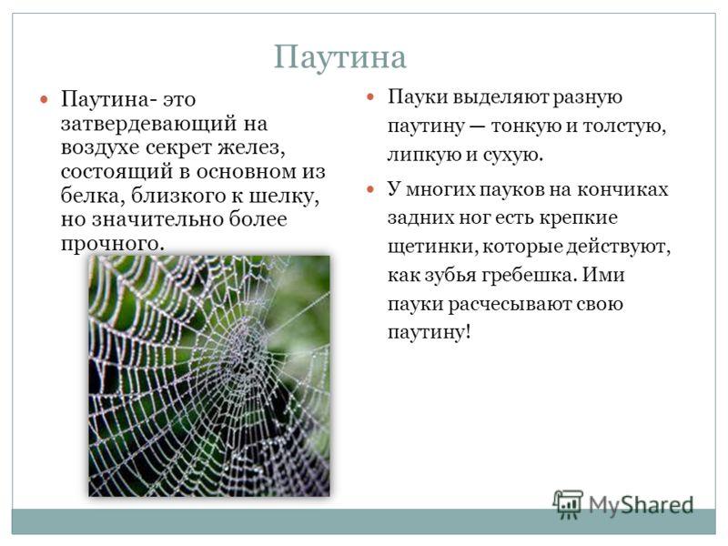 Паутина Паутина- это затвердевающий на воздухе секрет желез, состоящий в основном из белка, близкого к шелку, но значительно более прочного. Пауки выделяют разную паутину тонкую и толстую, липкую и сухую. У многих пауков на кончиках задних ног есть к