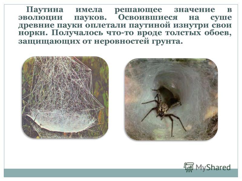 Паутина имела решающее значение в эволюции пауков. Освоившиеся на суше древние пауки оплетали паутиной изнутри свои норки. Получалось что-то вроде толстых обоев, защищающих от неровностей грунта.