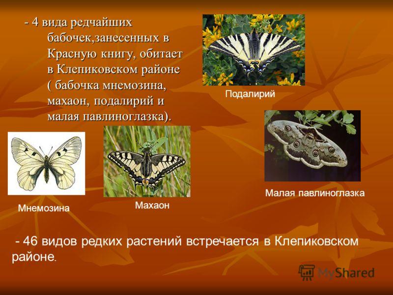 - 4 вида редчайших бабочек,занесенных в Красную книгу, обитает в Клепиковском районе ( бабочка мнемозина, махаон, подалирий и малая павлиноглазка). - 4 вида редчайших бабочек,занесенных в Красную книгу, обитает в Клепиковском районе ( бабочка мнемози