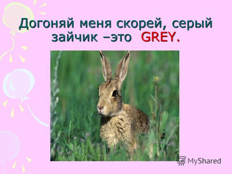 Догоняй меня скорей, серый зайчик –это GREY.