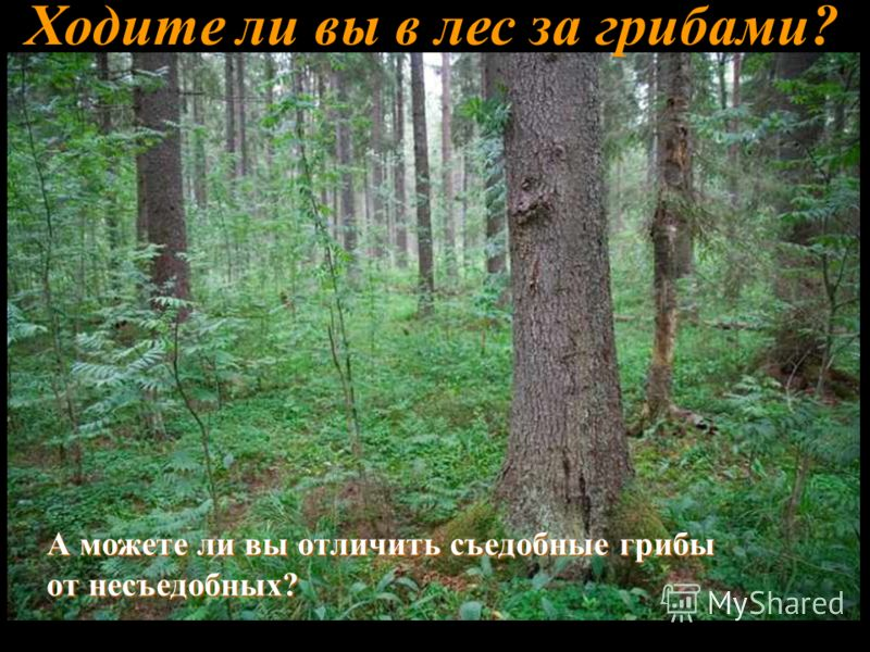 Ходите ли вы в лес за грибами? А можете ли вы отличить съедобные грибы от несъедобных?