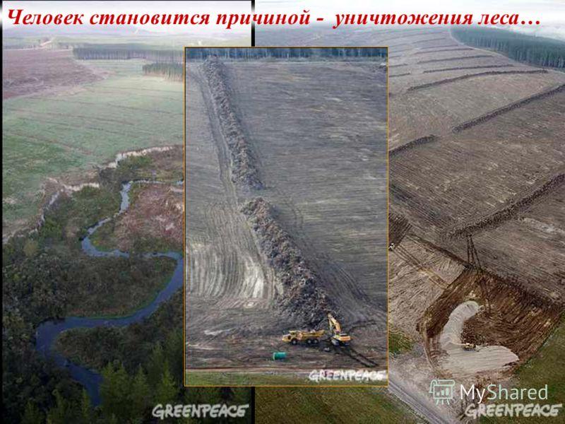 Человек становится причиной - уничтожения леса…