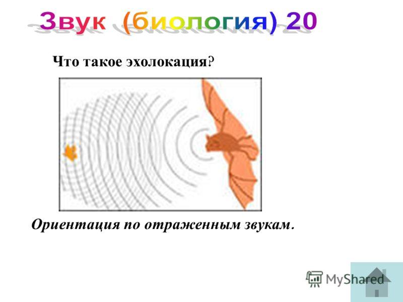 Что такое эхолокация ? Ориентация по отраженным звукам.