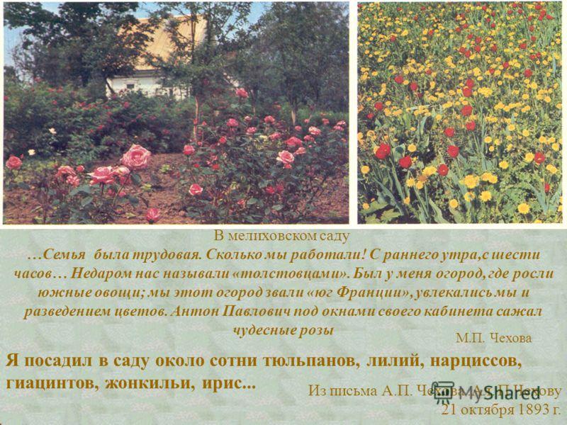 В мелиховском саду …Семья была трудовая. Сколько мы работали! С раннего утра,с шести часов… Недаром нас называли «толстовцами». Был у меня огород, где росли южные овощи; мы этот огород звали «юг Франции», увлекались мы и разведением цветов. Антон Пав