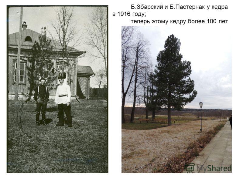 Б.Збарский и Б.Пастернак у кедра в 1916 году; теперь этому кедру более 100 лет