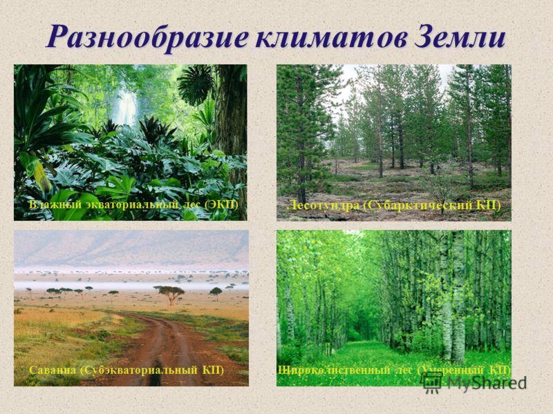 Разнообразие климатов Земли Лесотундра (Субарктический КП) Влажный экваториальный лес (ЭКП) Саванна (Субэкваториальный КП)Широколиственный лес (Умеренный КП)